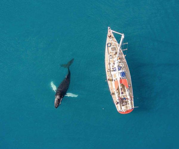 Baffin kayak and sail 3