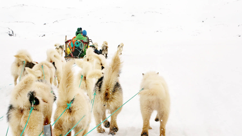 dogsledding in East Greenland